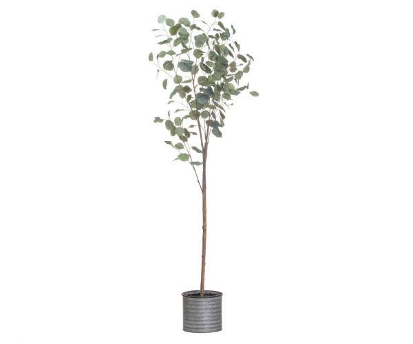 Large Eucalyptus Tree In Metallic Pot